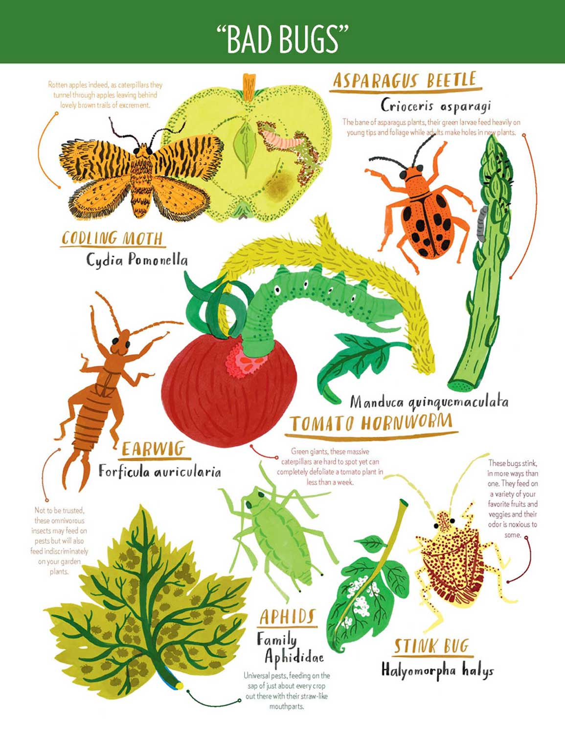 Good Insects For Gardens Garden Ftempo