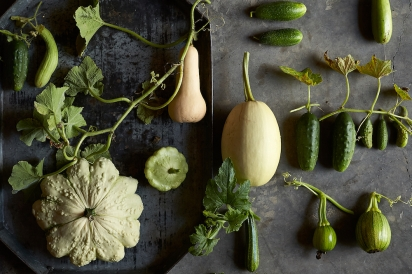 Cucumbers and squash seeds to plant this spring.