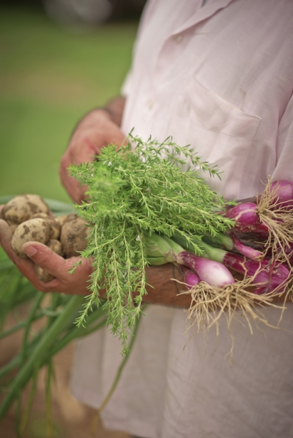 Chef Serge Madikians of Serevan gathering produce from a local farm.
