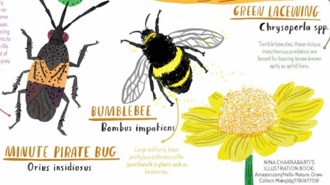 An illustrated guide to good bugs