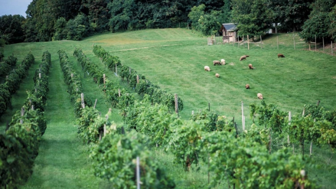 A Hudson Valley Winery