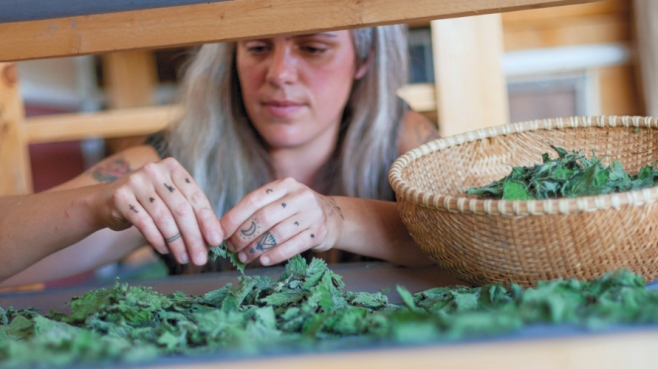 Lauren Giambrone of Good Fight Herb Co. sorting dried herbs